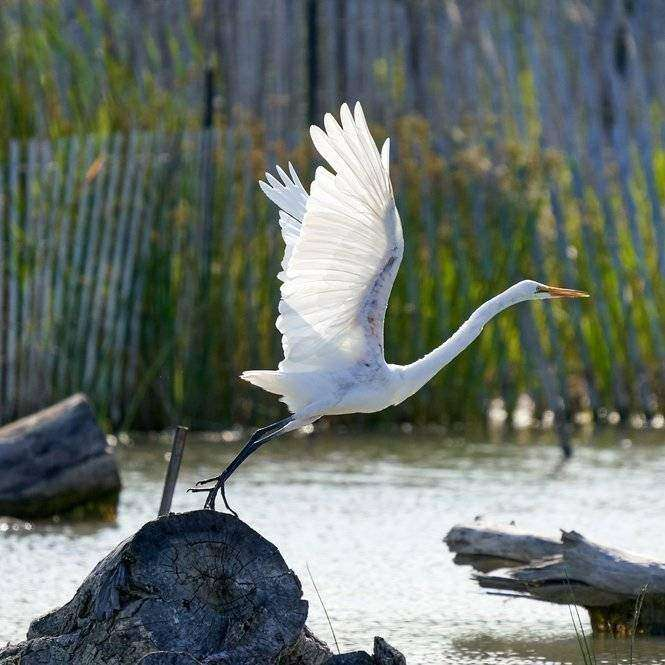 Creative Ways to Show Off Your Bird Photography