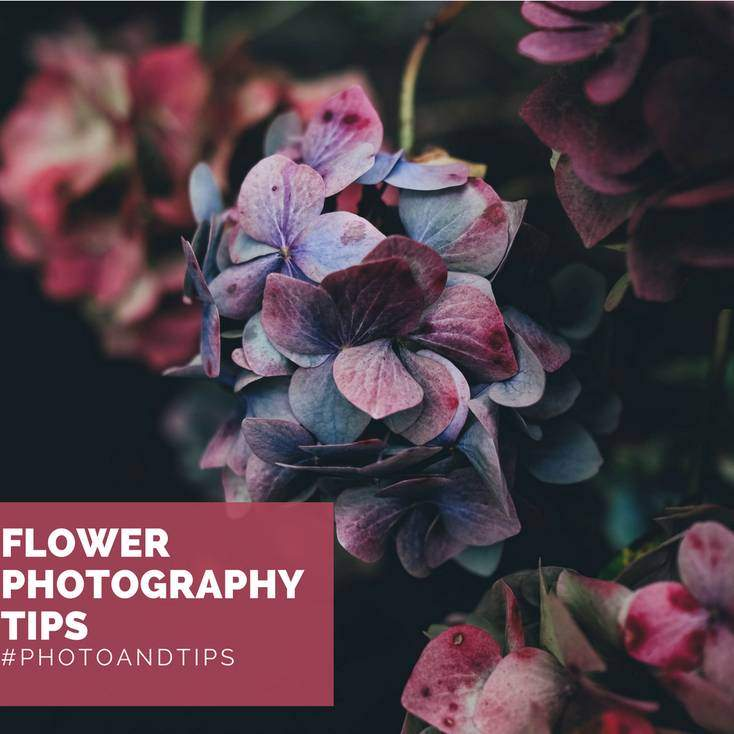 Flower Photography Tips